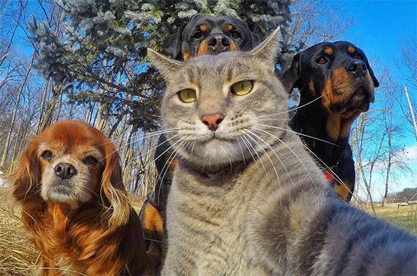 что дает человеку общение с животными