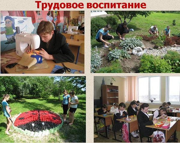 трудовое воспитание в школе