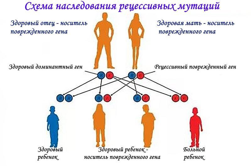 схема наследования рецессивных мутаций
