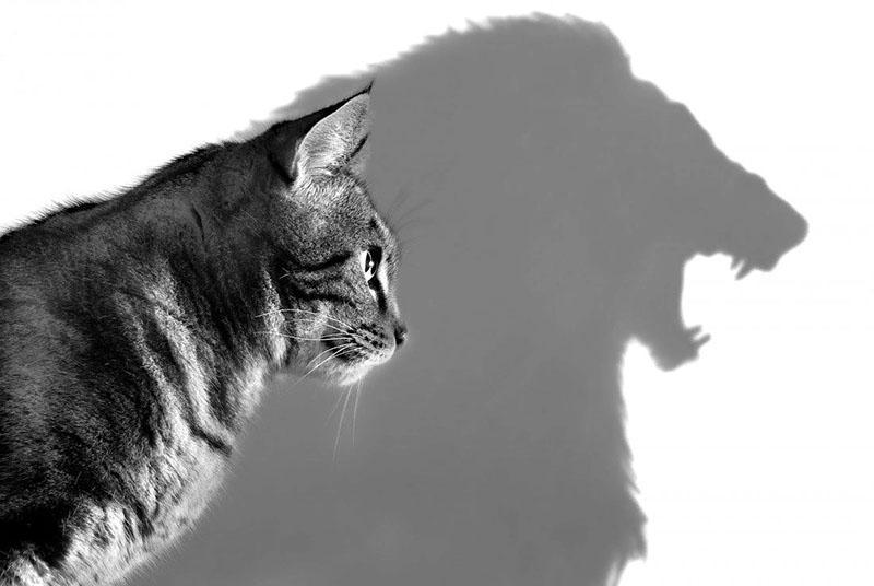 Чем отличается самоуверенность и уверенность, учимся распознавать