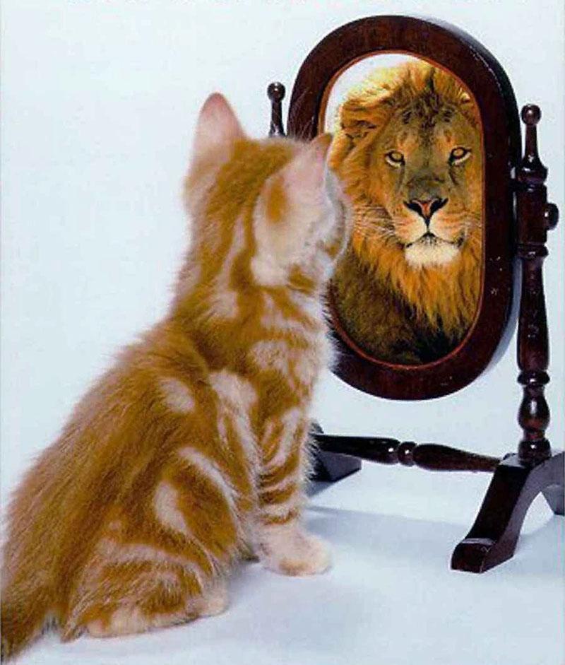 абсолютная уверенность в себе