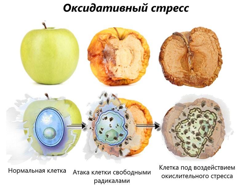 оксидативный стресс на примере яблока