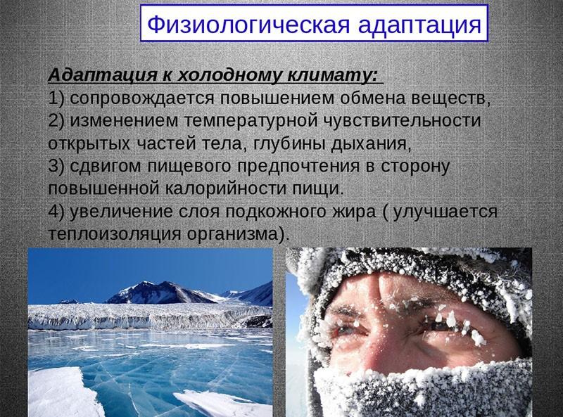 физиологическая адаптация к холодному климату