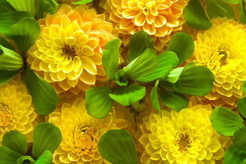психология цвета желтый