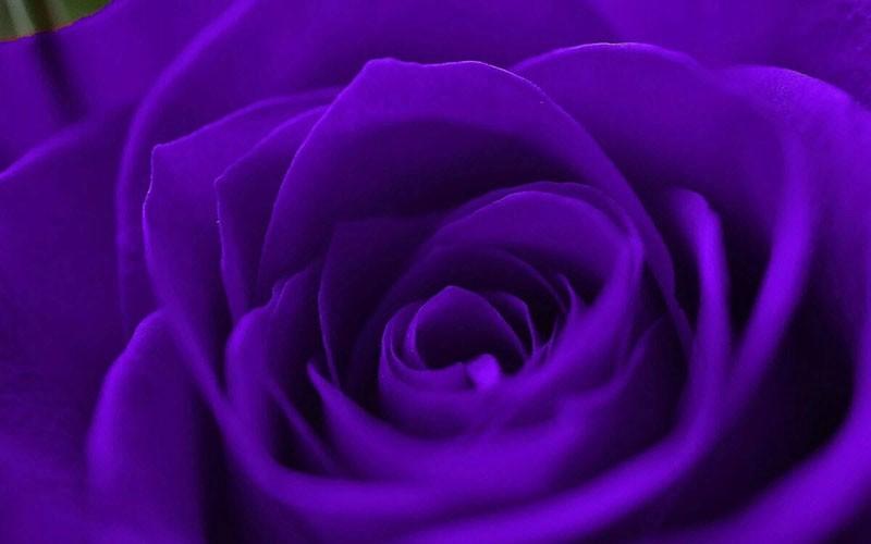 Что означает фиолетовый цвет в психологии людей