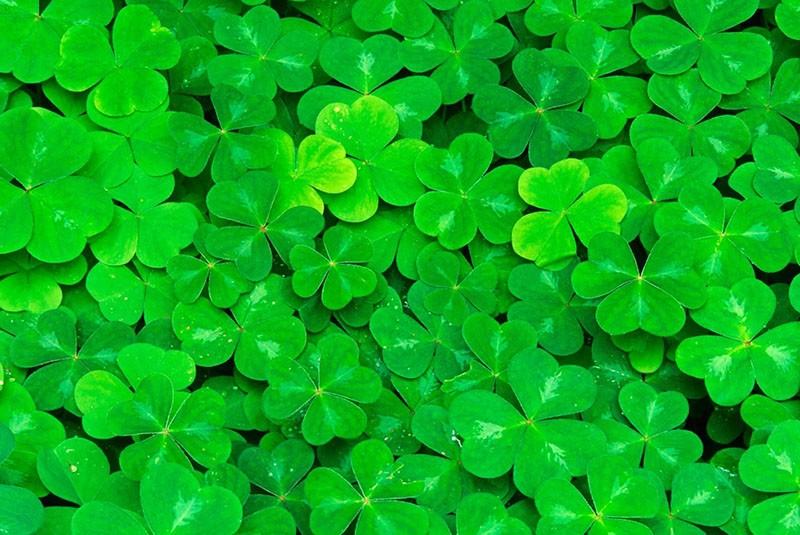 разнообразие зеленых оттенков